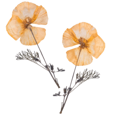 Image of pressed flower- outdoor activity idea