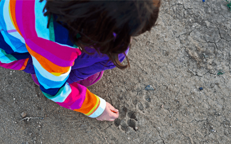 Animal tracks- outdoor activity idea for kids