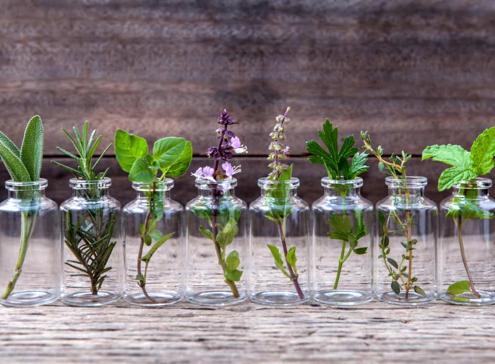 collection of plants in essential oil bottles